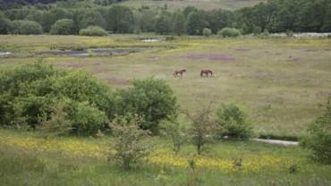 Natur og biodiversitet omkring Skellerup - Linådalen
