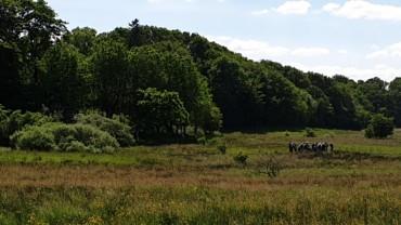 Beskyttelse af rigkær og enge ved Drost Peders Høj og Mønsted Kalkgruber