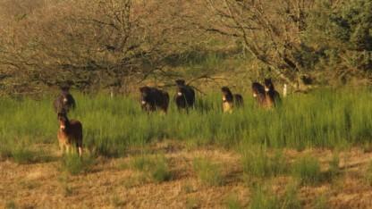 Rewilding i Mols Bjerge