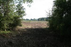 Kig ud over den ryddede mose fra skoven