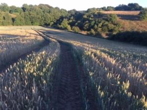 Hvedemarken med nuværende overdrev til højre