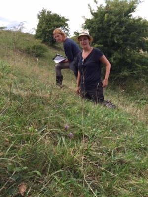 Med biologer fra Kolding Kommune på tur på det nuværende overdrev